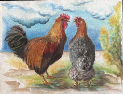 poule coq amoureux