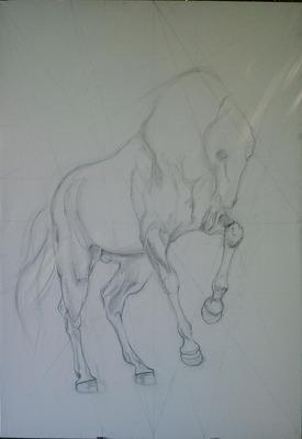 étude cheval
